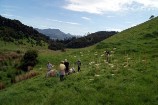 Overview of the catchment planting